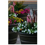 Container gardening can turn a drab yard into a feast for the eyes!