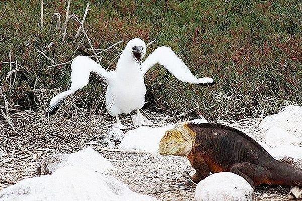 Galapagos Islands, Equador