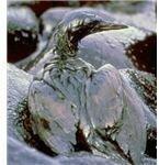 ExxonOilbird
