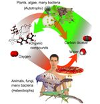 Basic plant metabolism