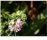 Natural repellent-www.flickr.com