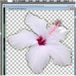 Flower with Blurred Selection Effect Applied