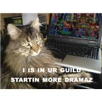 LOLCat - Guild Drama Cat