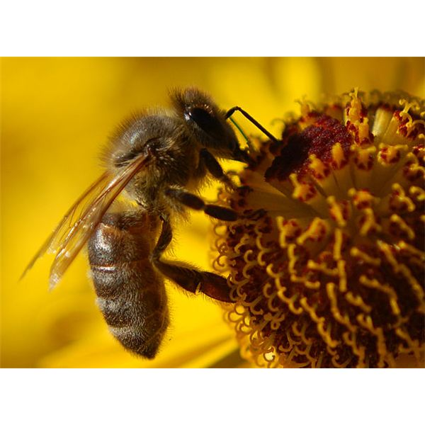 disappearing honey bees Why all the bees are dying  is a serious problem threatening the health of honey bees and the economic stability of  disappearing bees:.