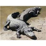 Adult Alligators