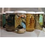 Jars of debris taken back for analysis in land-based laboratories.