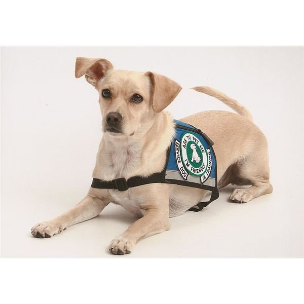 Service Dogs For Neurological Disorders