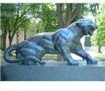 800px-Princeton University Cleo tiger