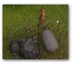 Wild Kebbit in Runescape