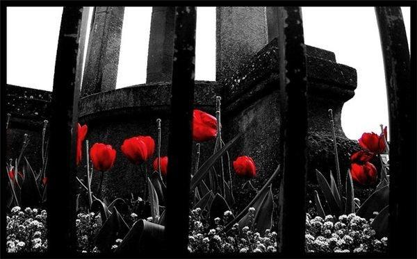 Как на черно-белом выделить красным цветом