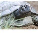 turtle1024x768