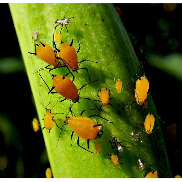 how to stop insects eating plant leaves