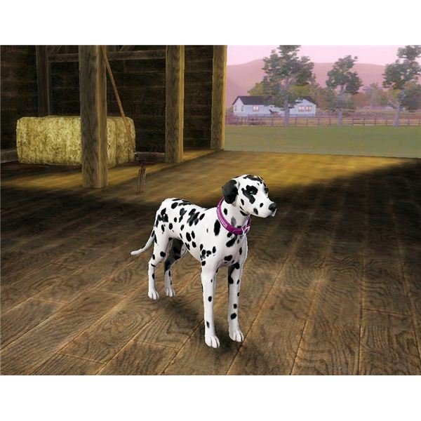 the sims 3 how to buy a dog