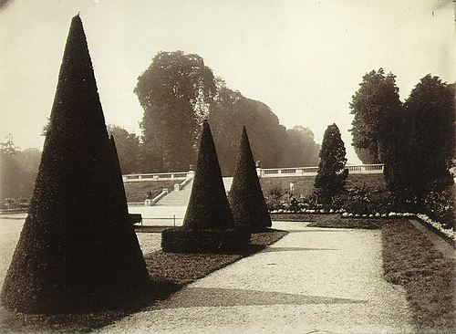 Cone Shaped Trees