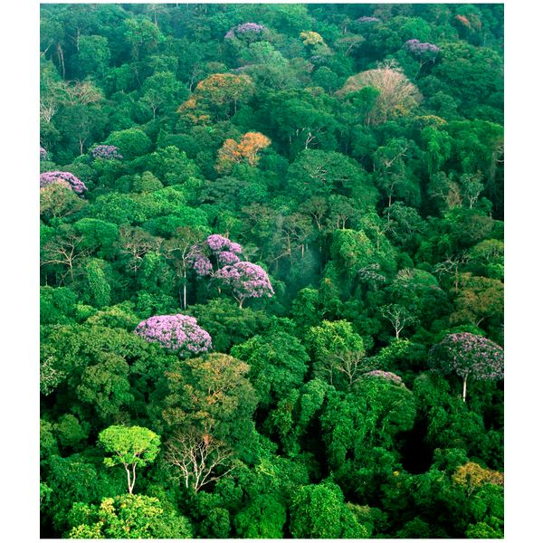 Facts About The Forest Floor Layer Of The Rainforest