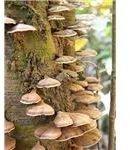 Fungi in Borneo