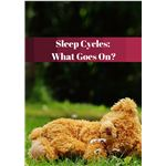 Sleep Cycles- What Goes On