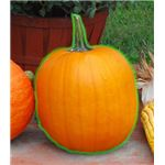 Pumpkin with Edges Marked