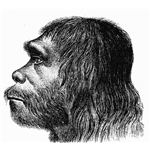 Neanderthaler Drawing