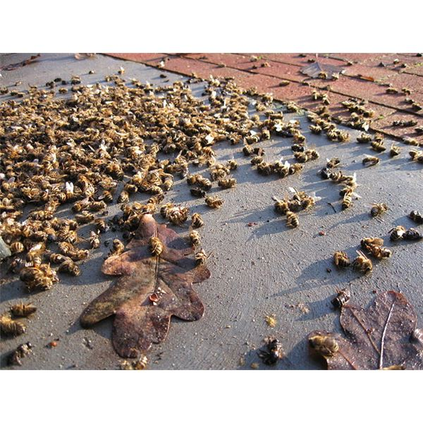 Image Result For How To Kill Bees