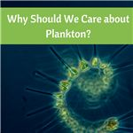 Why Should We Care About Plankton