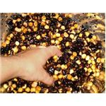 Flint Corn Was Used to Make Hominy
