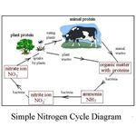 Pictoral Simple Nitrogen Cycle Diagram