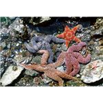 Rocky Shore Intertidal Zone