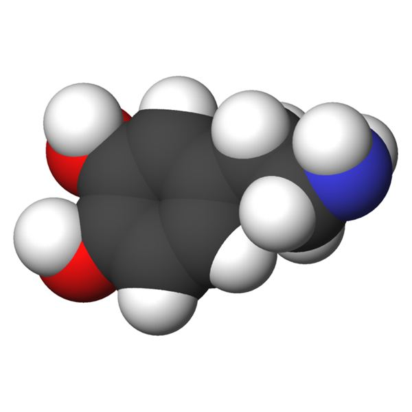 What Causes Gambling Addiction? The Role of Dopamine ...