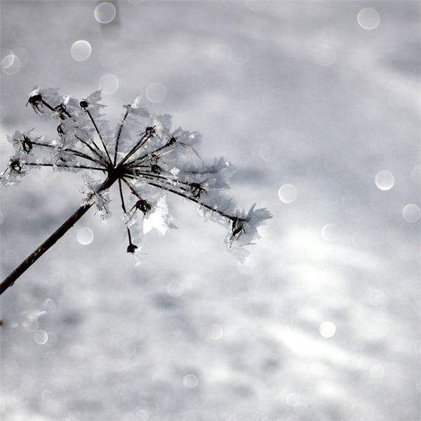 A Bokeh of Snow Fall