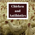 Chicken and Antibiotics