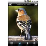 BirdsUK- Bird watching-Android app-pic