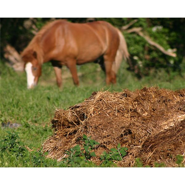 Manure Advice For Use In Gardens Hints Tips For Using Animal Manure In Your Vegetable Garden