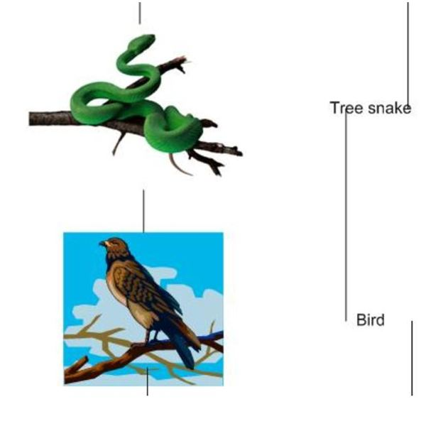 How the Tropical Rainforest Food Chain Works