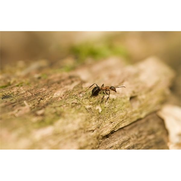 how to repel ants naturally non toxic ant killer recipe. Black Bedroom Furniture Sets. Home Design Ideas