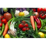 Certified Organic Wholesale Distributors