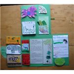 Rainforest Lapbook Open