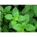 peppermint tea can be an effective remedy for an upset stomach