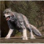 Dragon Age Wolf