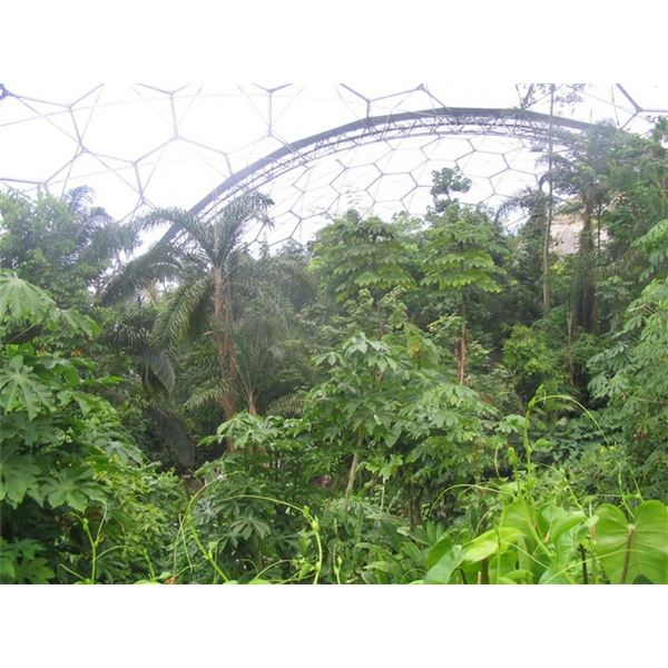Tropical Forest Canopy At Eden