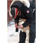 Lead Musher Lance Mackey