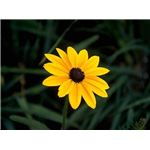 yellow-flower-4