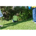 Hunting for Easter eggs by Bobjgalindo/Wikimedia Commons
