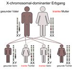 female X chromosome inheritance through generations