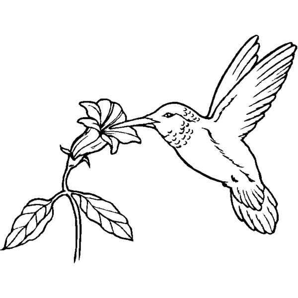 Humming Bird Coloring Sheet