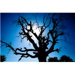Tree Silhouette - Direct Positive