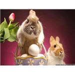 Bunnies and Easter Basket Wallpaper