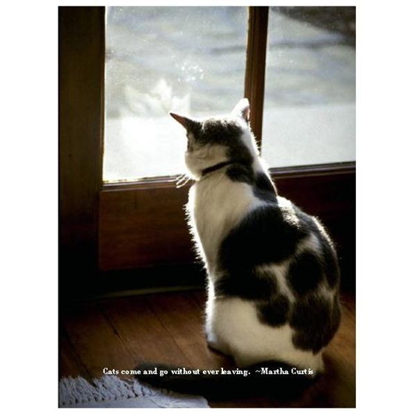 Cat Loss Quotes on QuotesTopics
