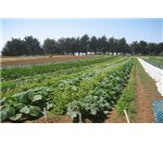 UCSC Organic Farm