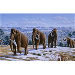 800px-Woolly mammoth - image published in a Public Library of Science journal and released under Creative Commons License
